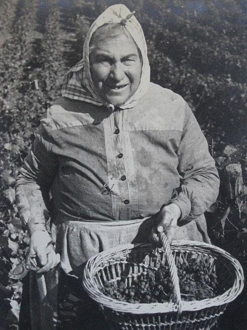 Henri Gros (Photographe). Une vendangeuse. Vendanges en Bourgogne
