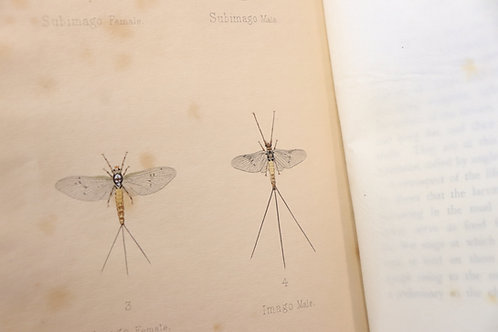 Frederic M. Halford. Dry-Fly Fishing in theory and practice. 1902. Bel ex.