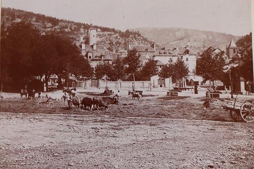Photographie ancienne 1899 La Canourgue Battage du blé par vaches Lozère