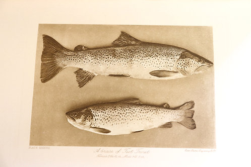 F. M. Halford. Modern Development of the Dry Fly. The New Dry Fly patterns 1910