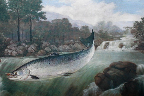 Pêche à la mouche. The Complete Science of Fly-Fishing and Spinning (1914)