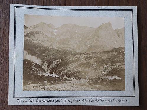 Suisse photographie ancienne Col de San Bernardino 1901 Vaches Chalet Valais