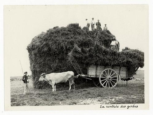 Photographie ancienne vers 1910 Rentrée des gerbes chevaux agriculture bourgogne
