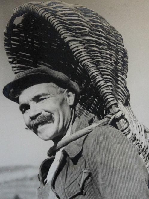 Henri Gros (Photographe). Homme au panier. Vendanges en Bourgogne