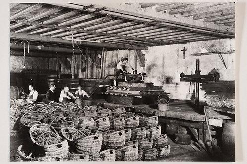 Photographie originale vendanges en Bourgogne vers 1940 le pressage les paniers
