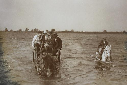 photographie originale Vintage family snapshot chariots tirés par des chevaux