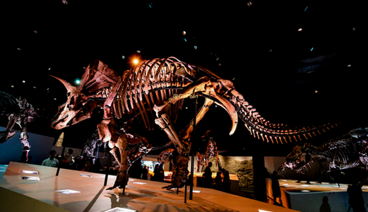 Natural Houston Museum