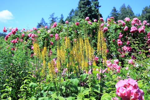 Butchard Garden- BC