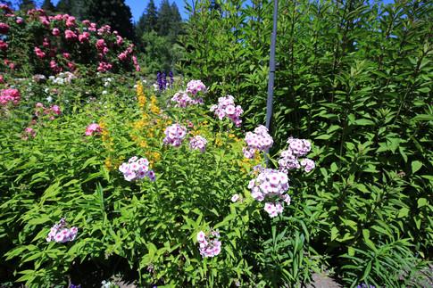 Butchard Garden- Vic- BC Canada
