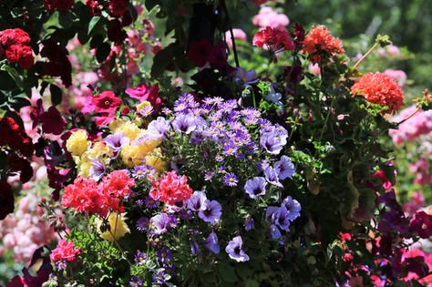 Butchard Garden