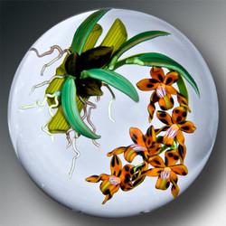 Tiger Odontoglossums