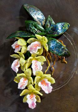 Trichopillia Orchids