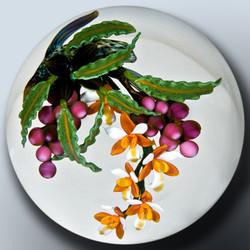 Orange White Orchid Illustration
