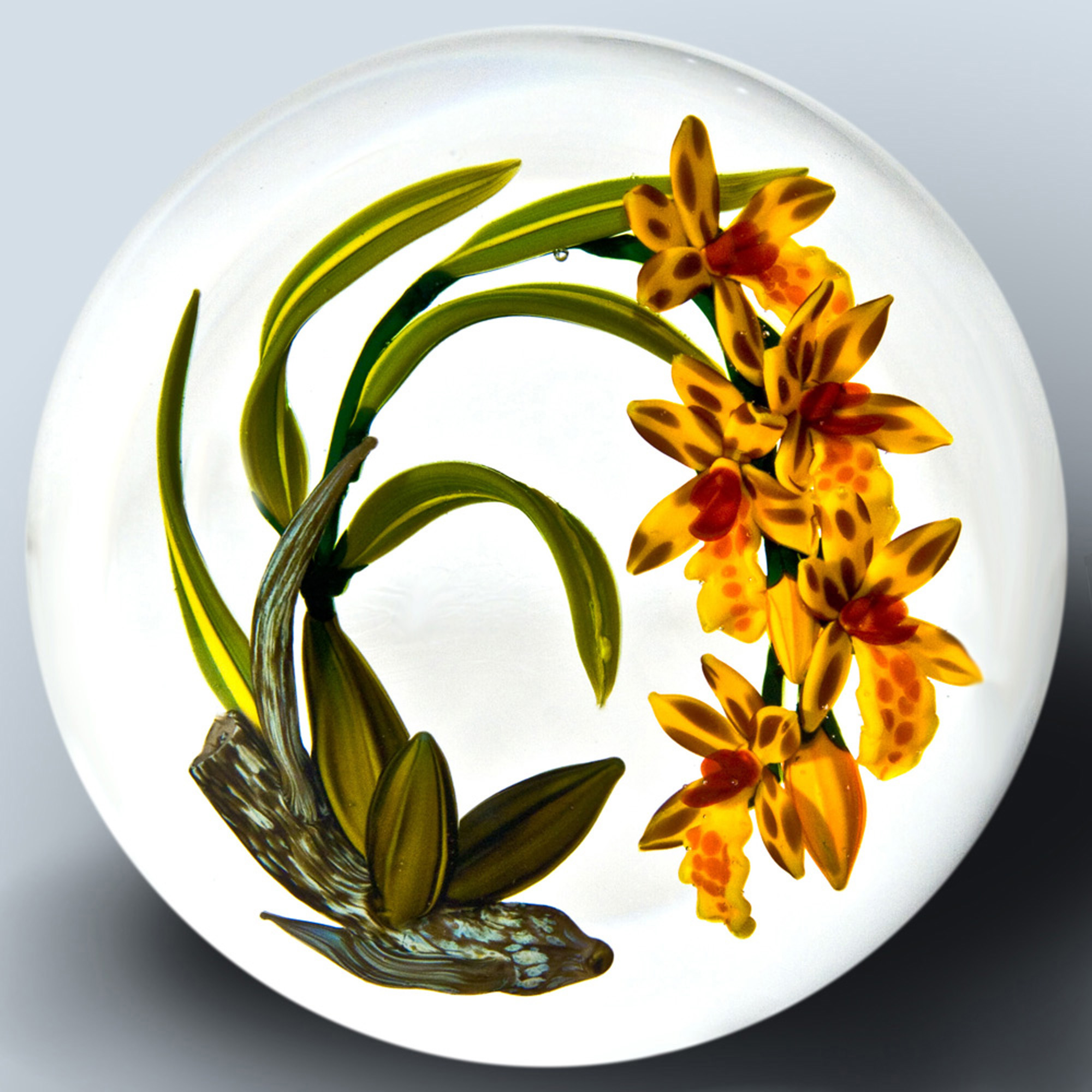 Oncidium Illustration