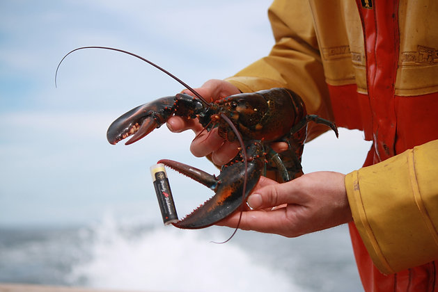 Fundy Fisherman Lip Balm
