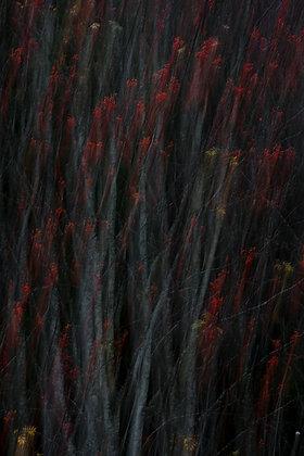 Painting with the Autumn (Rowan)
