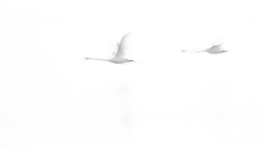 swans-double-exposure.jpg