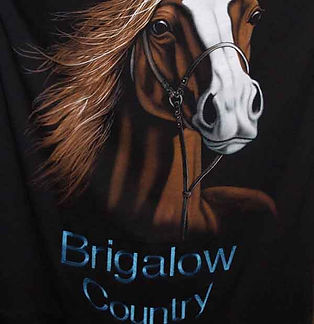 Brigalow Country  | Tracy and the Big D