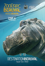 BEAUVAL HIPPO 2019.jpeg