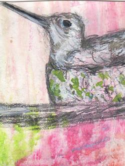 baby hummer in nest