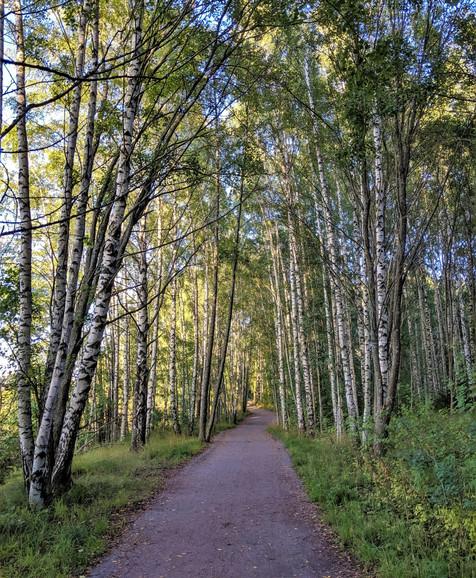 Finland_forest_1.jpg