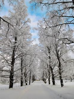 20180128-Winter_9.jpg