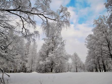 20180128-Winter_8.jpg