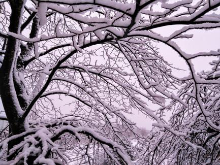 20171201-Winter_44.jpg