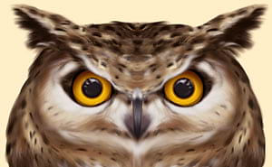 Owl with normal eyes