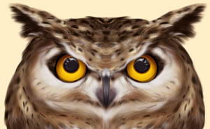 Owl with eyes looking up