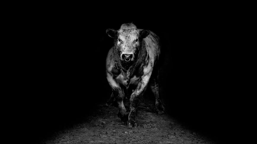 Bull No 1 v2 Wide.jpg