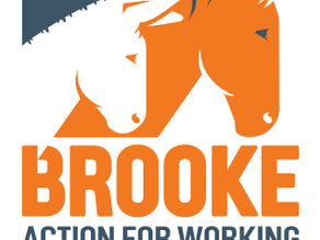 Trailer Vision is Now Supporting Brooke!