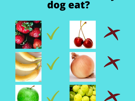 Can my dog eat strawberries?