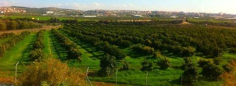 שווי נחלה ותשלום לרשות מקרקעי ישראל