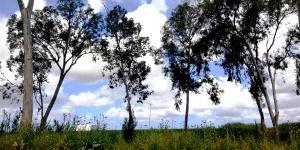 קרקעות חקלאיות