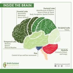 BTFPAK - Inside the brain - english