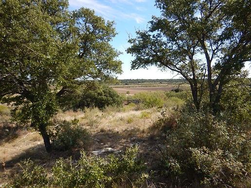 ranch 3.jpg
