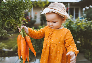 Child holding carrots in garden healthy