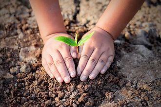Two hands of the children are planting t