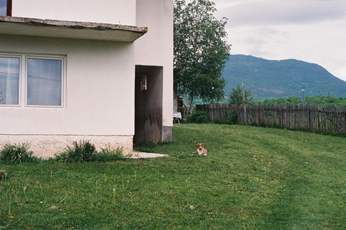 Grandparents' house and their little puppy