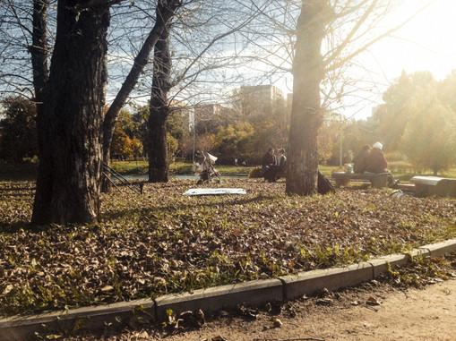 WHAT HAVE WE DONE WITH US: Парк Дружбы ещё утопает в зелени, но все деревья на полуострове давно уже опали