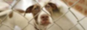 shelter dog.jpg