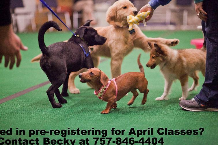 dog obedience training in yorktown or hampton va