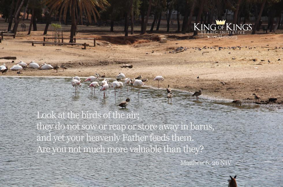 Matthew 6- 26.jpg