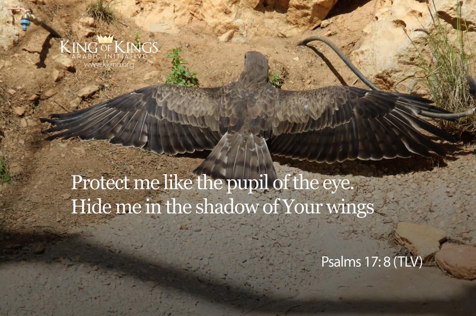 Psalms 17- 8.jpg