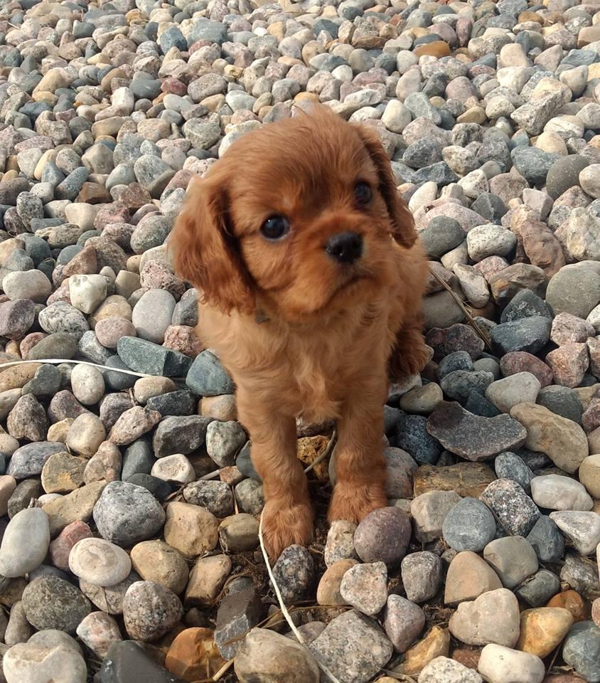 Precious Ruby