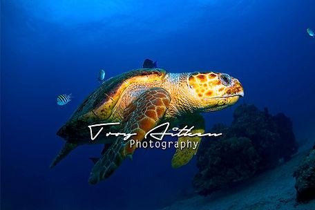 Bahamas Underwater Photographer