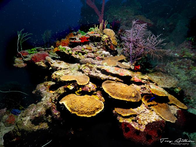 Troy Aitken Photography - Underwater