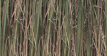 Hunting Camouflage - Green Reeds preview