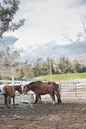 Ranch December 2019-9.jpg